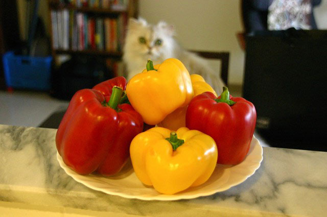 are bell peppers safe for cats