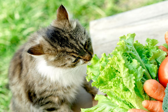 can cats eat vegetables 1
