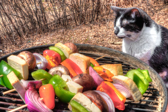 can cats eat vegetables