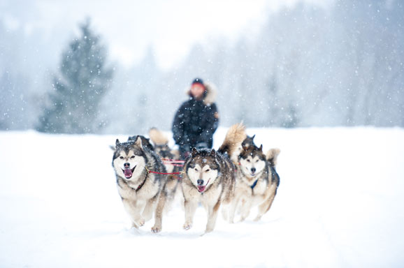 how expensive is it to own a Husky