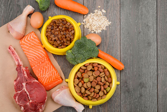 nutritional value of salmon for cats
