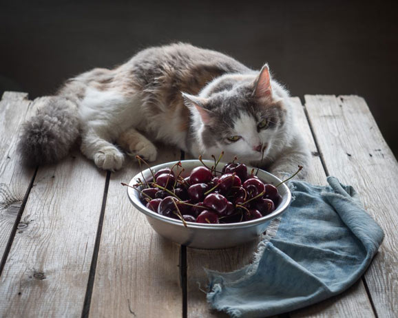 cherries-nutritional-value-for-cats