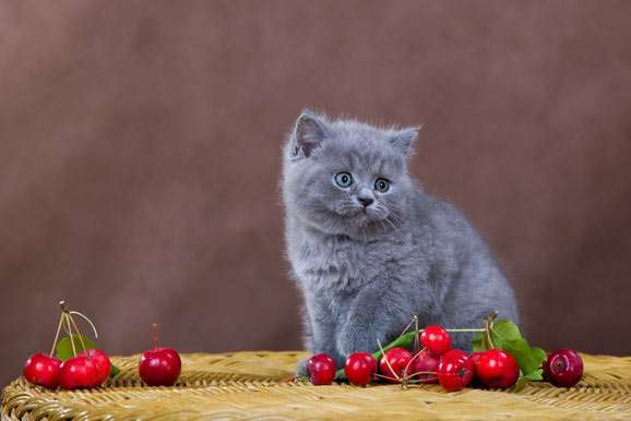 how-to-feed-cherries-to-cats