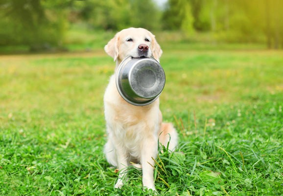 is-okra-safe-for-dogs-to-eat