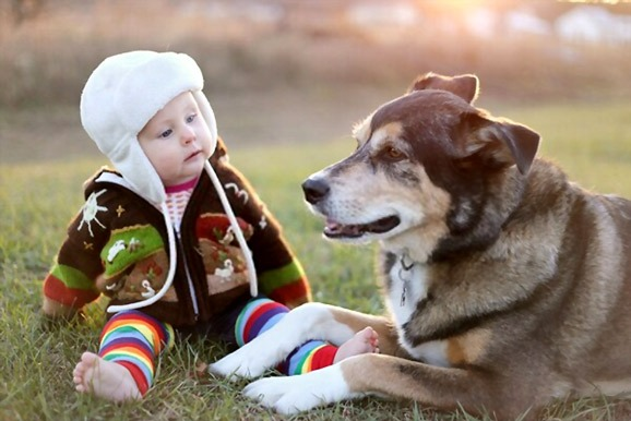 the-truth-about-dog-breeders