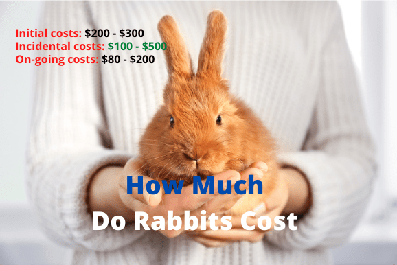 how much does it cost to get a rabbit fixed Archives ...