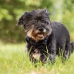 best artificial grass for dog