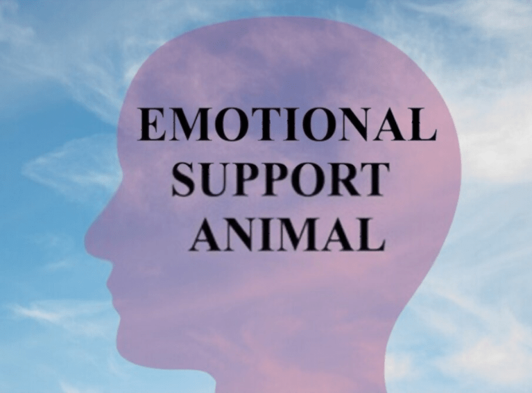 How do you qualify for an emotional support animal