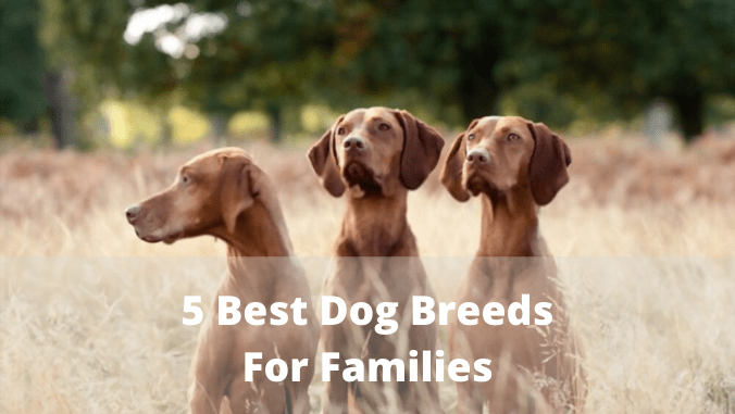 5 Best Dog Breeds For Families