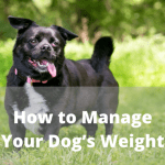 How to Manage Your Dog's Weight
