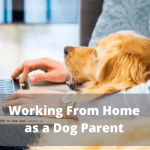 Working From Home as a Dog Parent