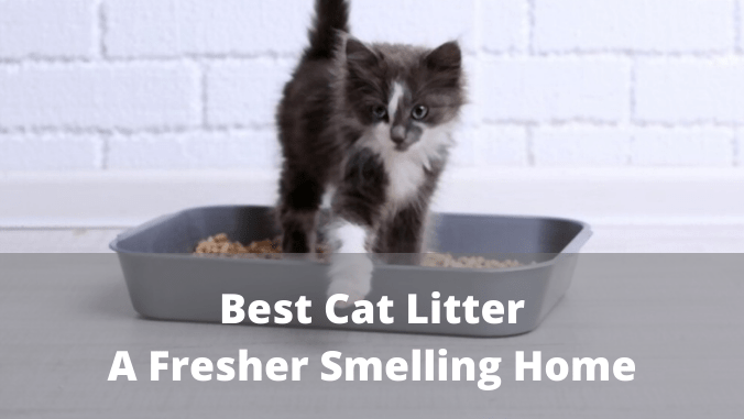 Choosing the best Cat Litter A Fresher Smelling Home