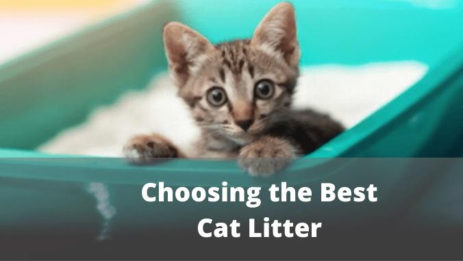 Choosing the best Cat Litter