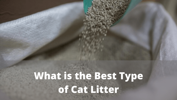 What is the Best Type of Cat Litter