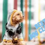 Best Dog Clothes