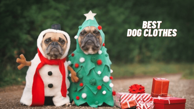 best dog clothes for small dogs-toptipsforher.com