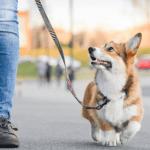 Dog-Walker Gear